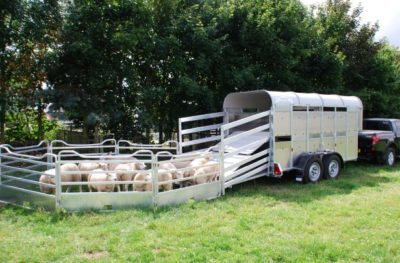 livestock trailer with sheep hurdles