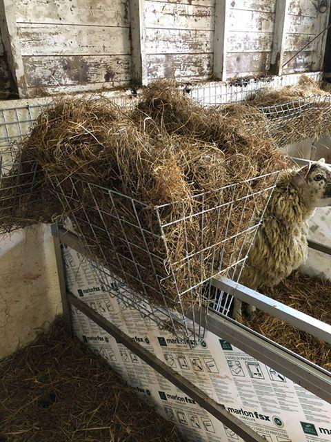 Basket feeder full of hay